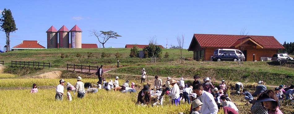 みのりの丘稲刈り風景