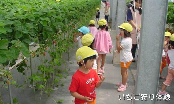 taiken_syukaku_ichigo